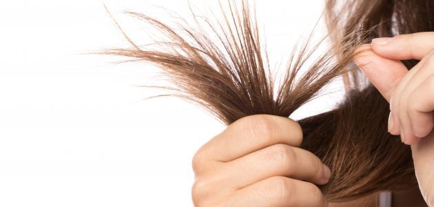 صورة كيف أتخلص من تقصف الشعر