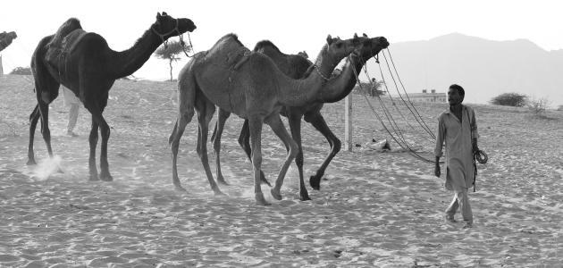 صورة قصائد العرب