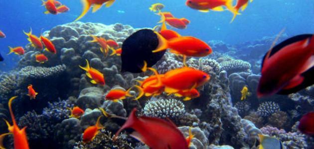 صورة جزيرة مصرية في البحر الأحمر