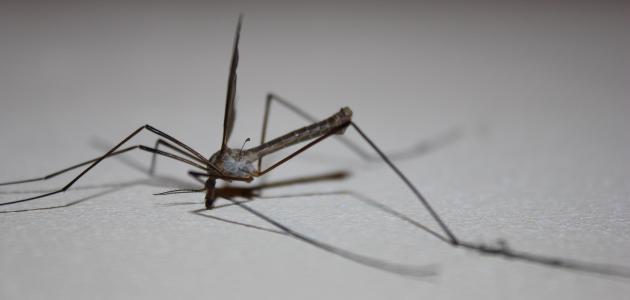 صورة أفضل حل لقتل الناموس